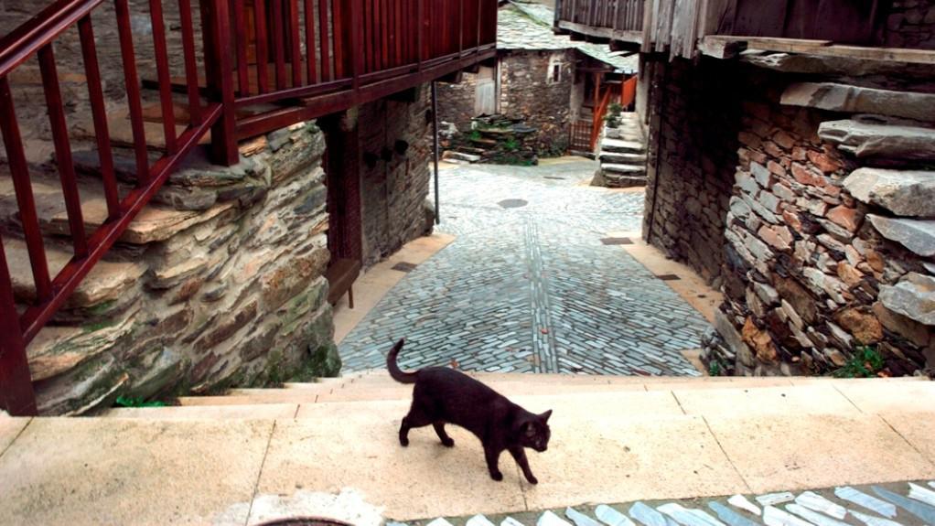 černé kočičí galerie
