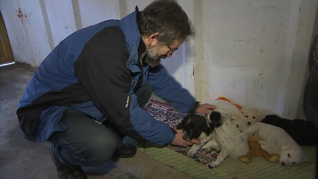 O štěňata pečuje starosta Jan Pijáček