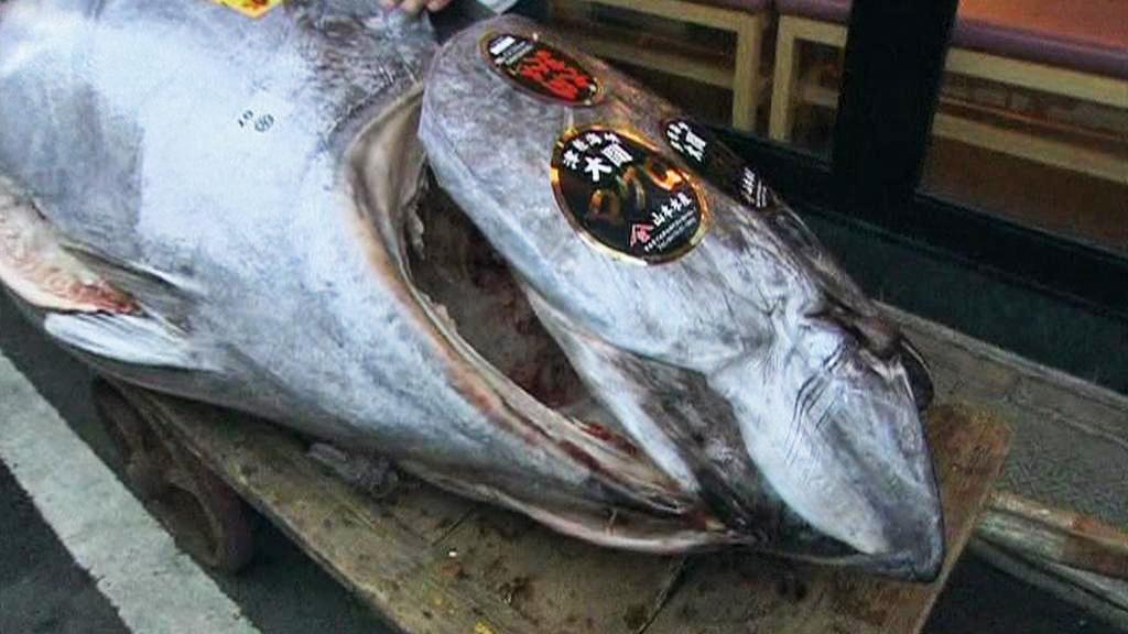 Rekordně vydražený tuňák