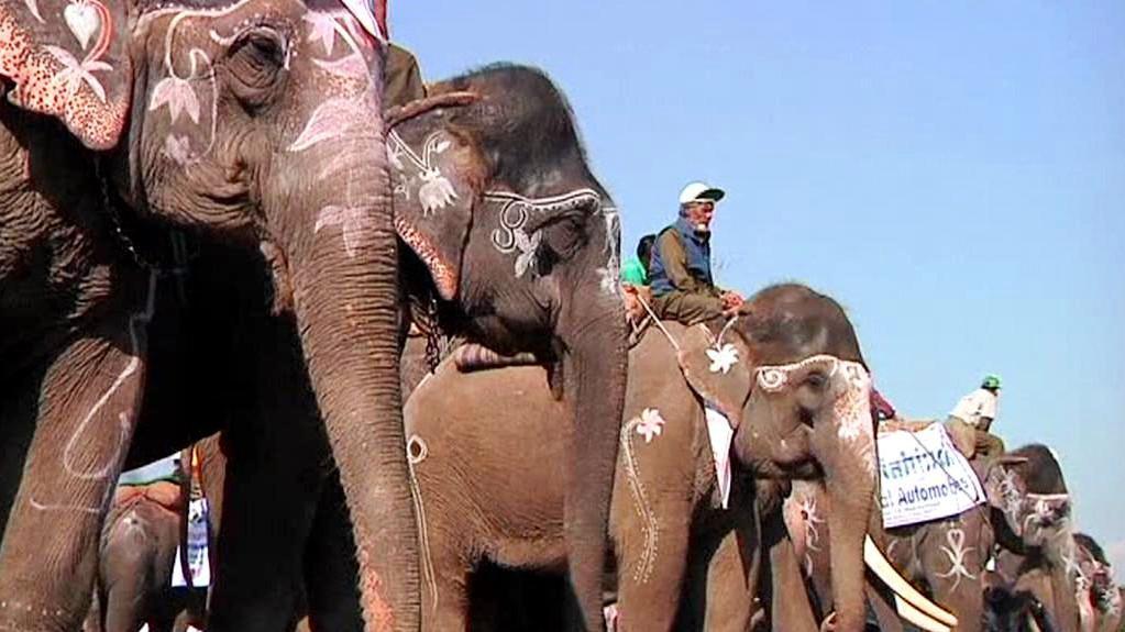 Start sloních dostihů