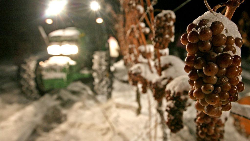 Ledové víno