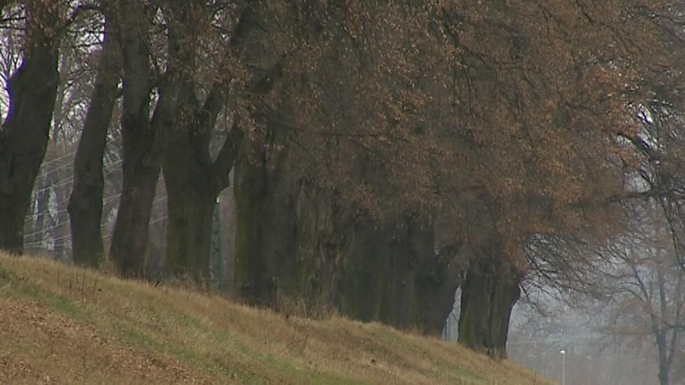 Stromy v aleji jsou přestárlé