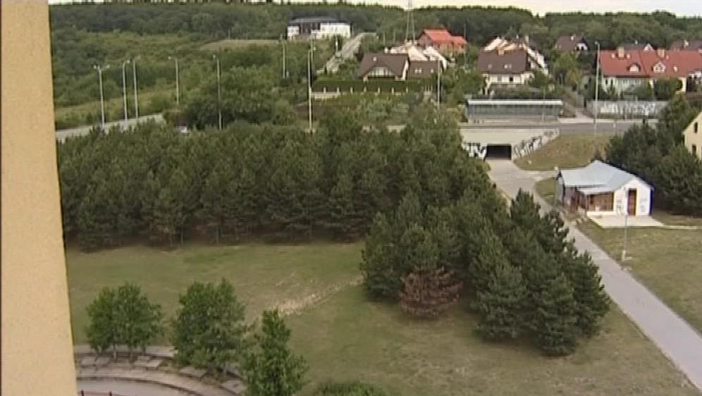 Borovicový háj v Horníkově ulici v Brně