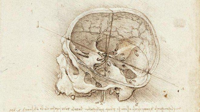 Leonardo da Vinci – A cranium sectioned (1489)