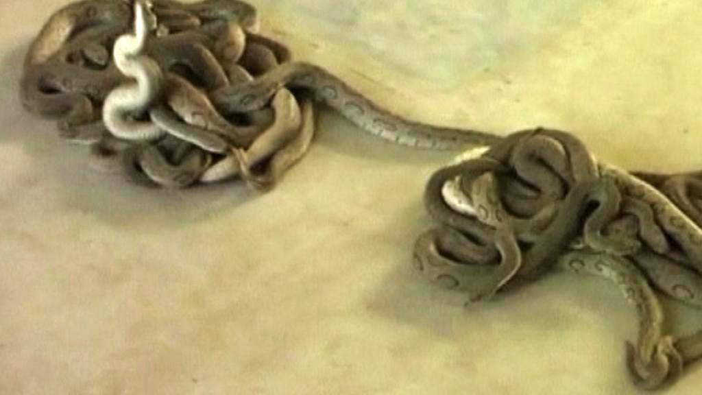 Hadi na daňovém úřadu v Indii