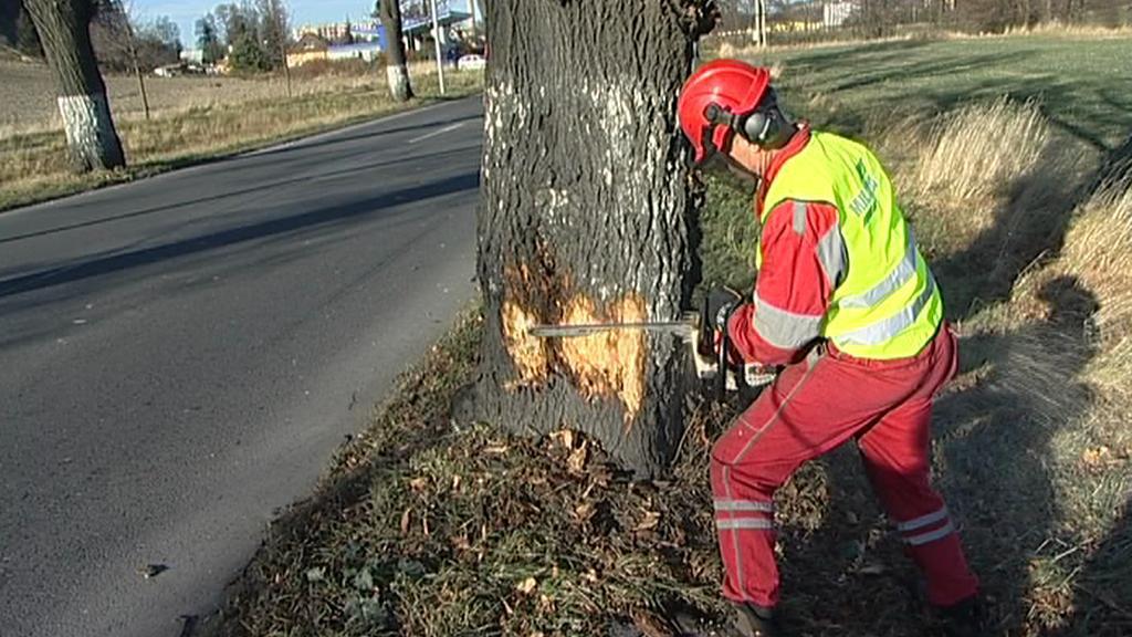 Kácení stromů u silnic