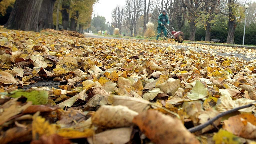 Odklízení listí