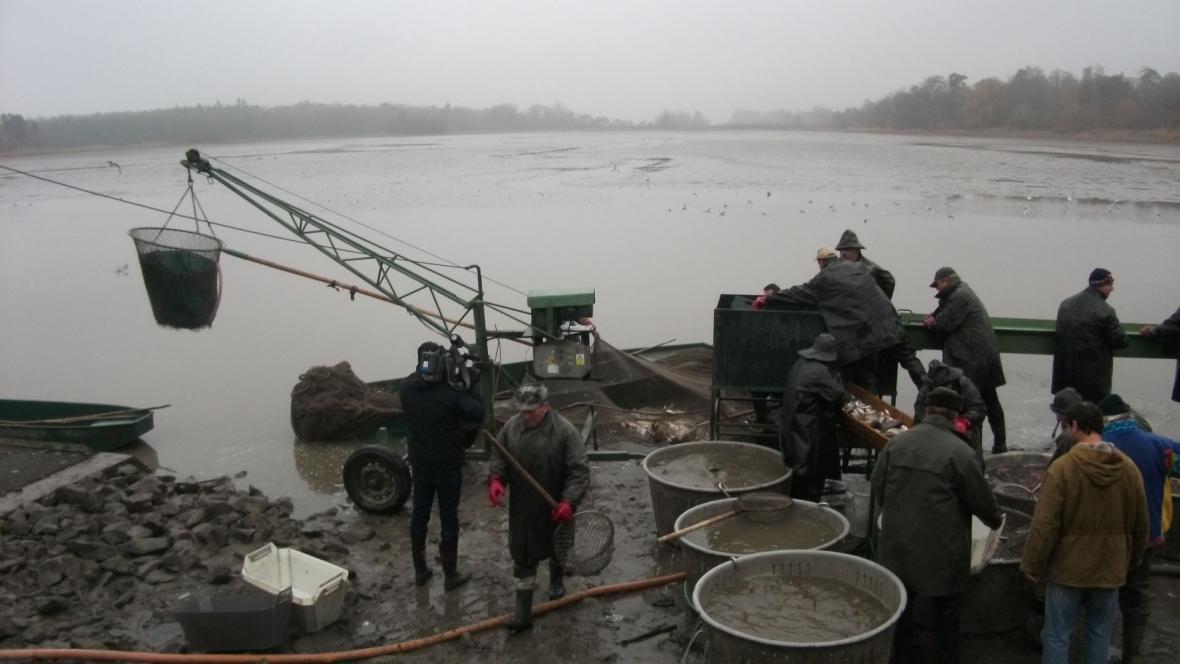 Ryby vytáhli rybáři na jeden zátah