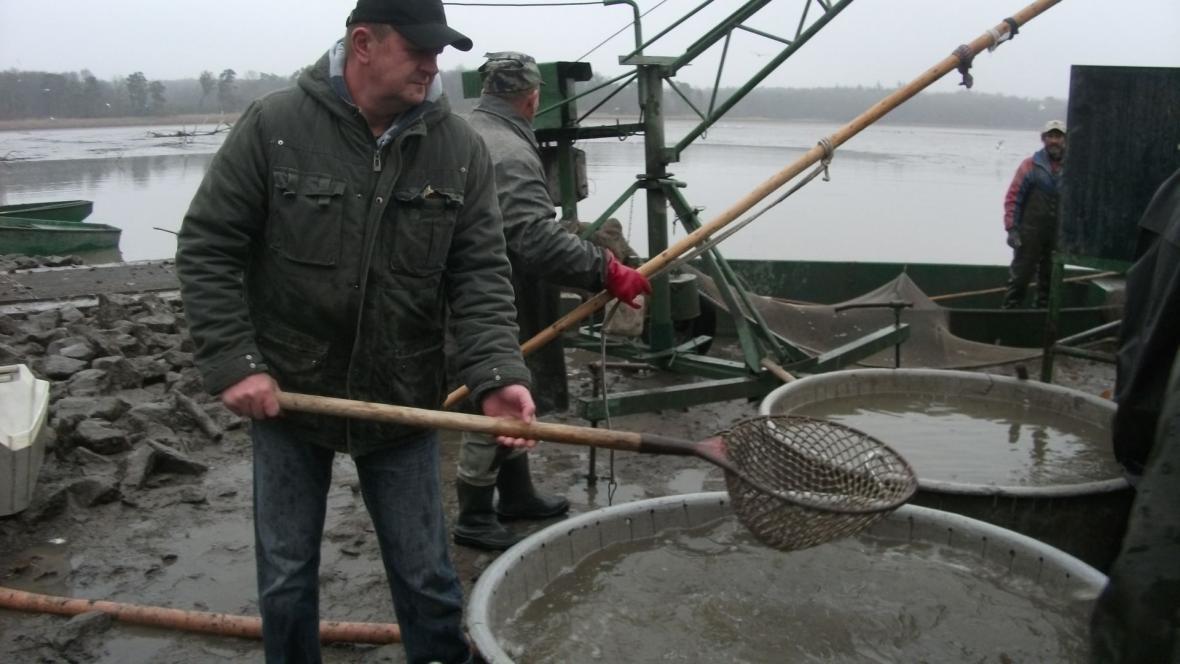 Výlov lednických rybníků