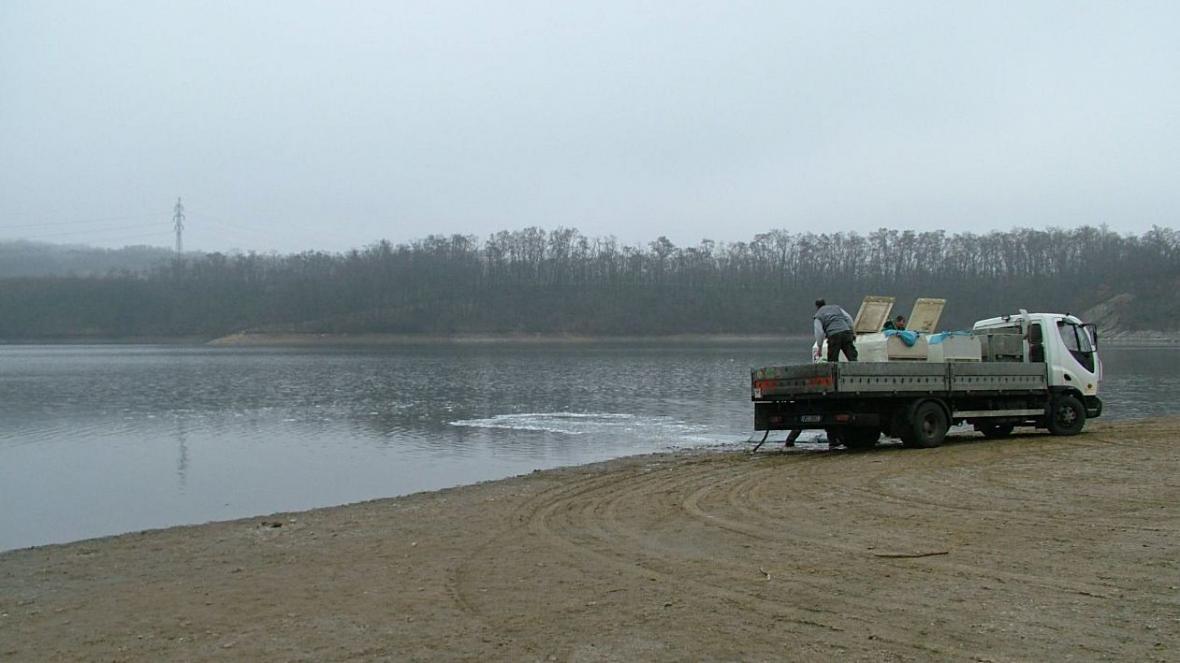 Vypuštění ryb do Výrovické přehrady