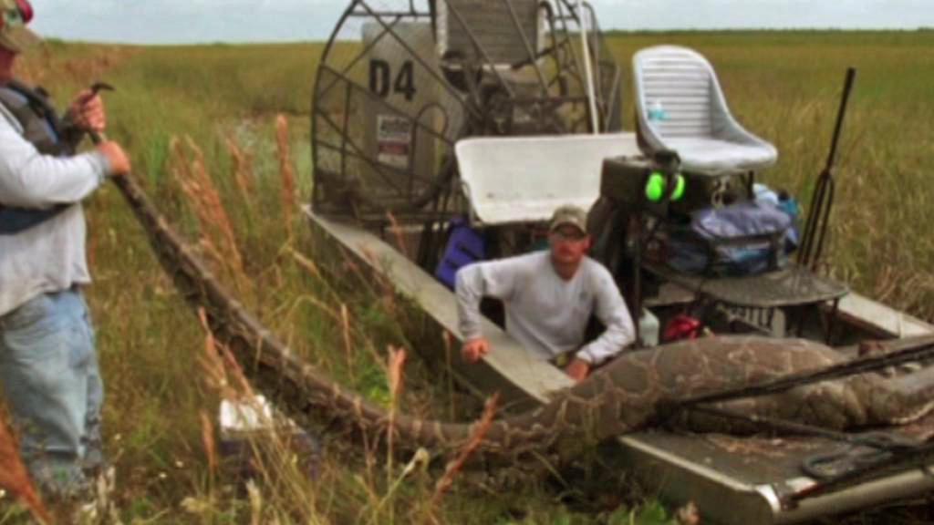 Na Floridě chytili pětimetrovou krajtu