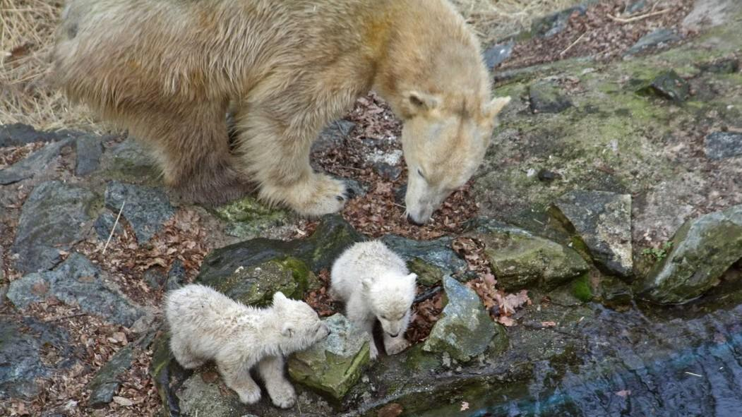 Cora a medvíďata Tom a Bill