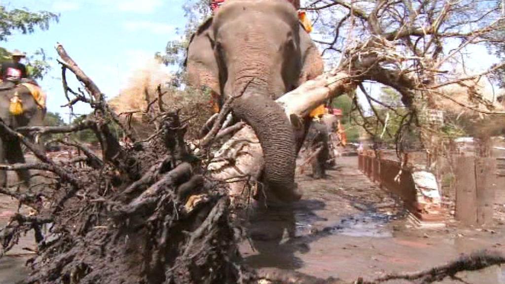 Při úklidu po povodních pomáhají v Thajsku sloni
