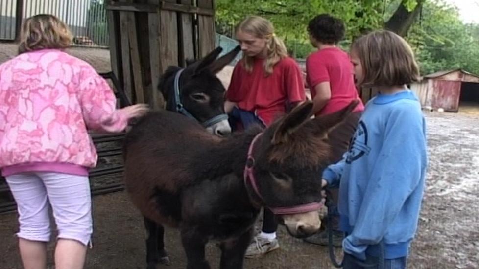 Oslice Rebeka pomáhá dětem