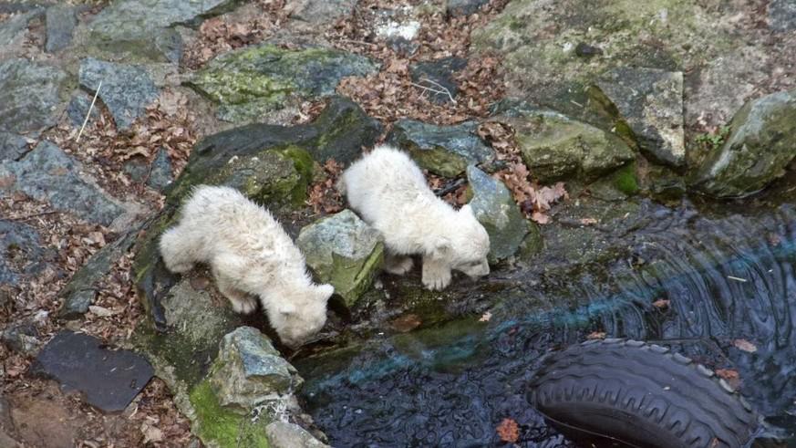 První den se Tom s Billem ještě vody báli