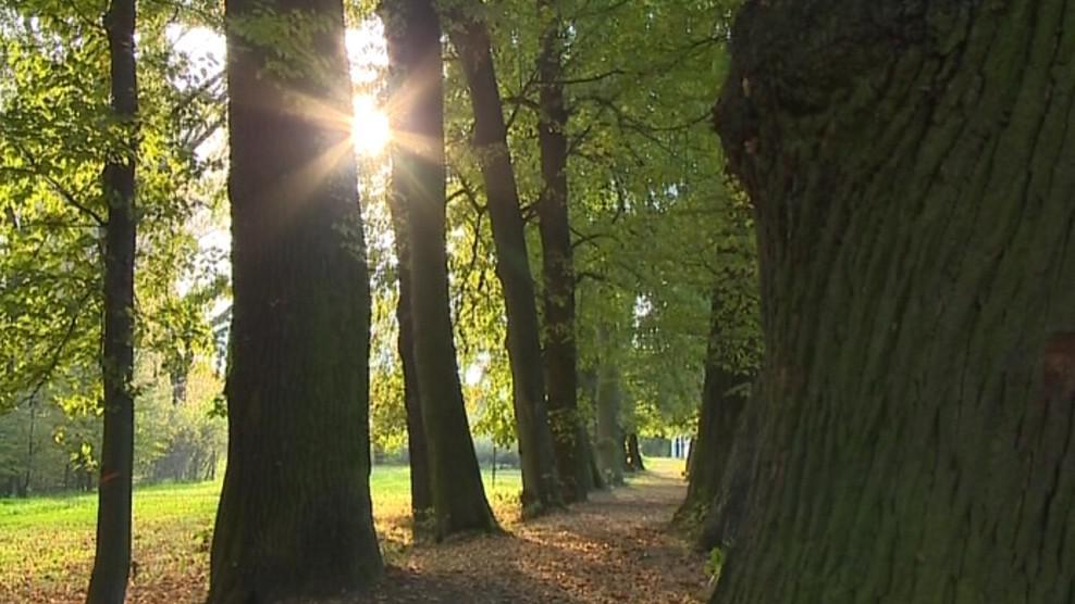 Vítězné stromy v aleji ve Skaličce