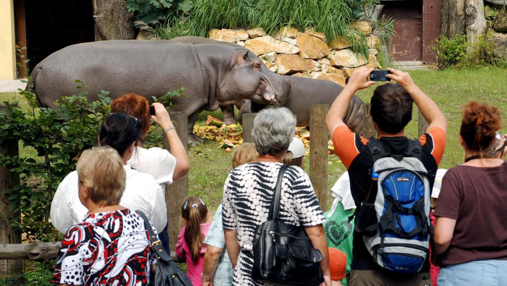 Hroši v ostravské zoo