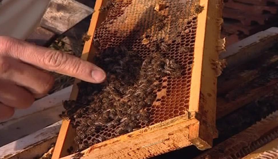 Včelař ukazuje nemocné včely