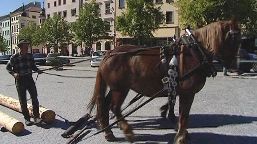 Tažní koně