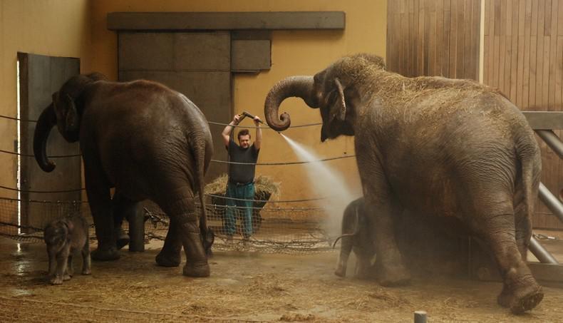 Sprchování slonů