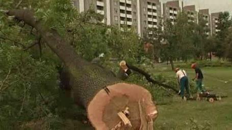 Kácení stromů na místě, kde se má stavět