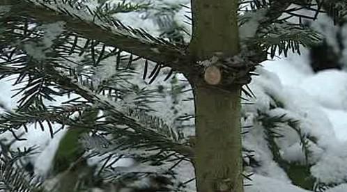 Ostříhaný stromek
