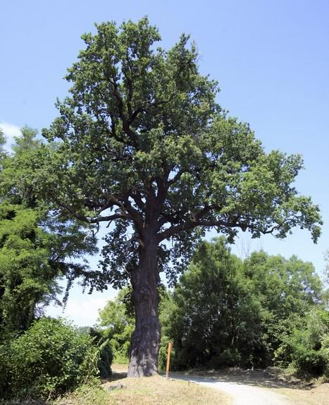 Strom roku 2010