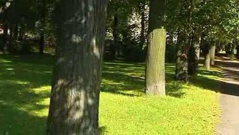 Park, ve kterém by měl stát pomník