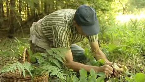 Houbař v lese