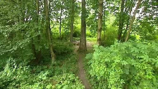 Huťský lesík