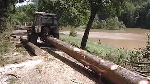 Lesní Polom