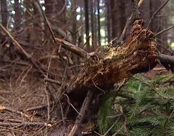 Poničený les