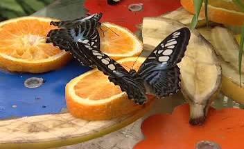 Motýlí pamlsky