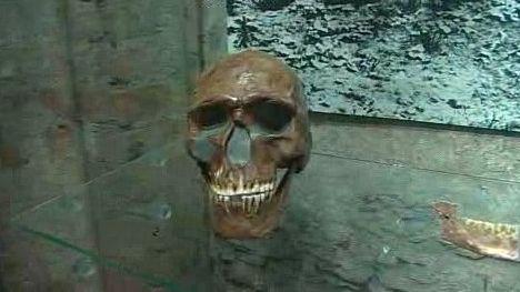 Lebka pravěkého muže