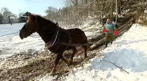 Využití koně při stahování dřeva