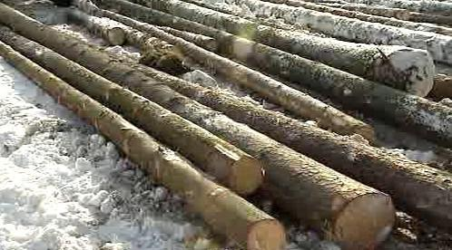 Zpracované kmeny stromů
