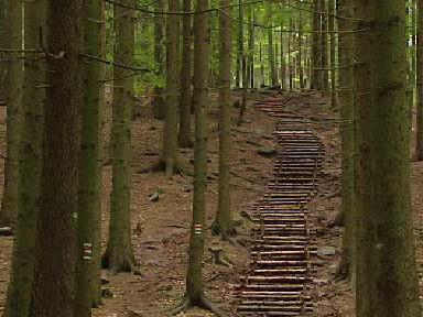 Turistický chodník v lese