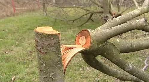 Naříznutý stromek
