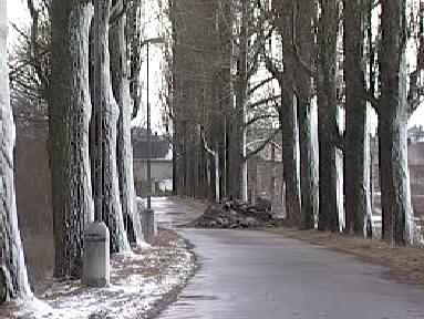 Alej stromů