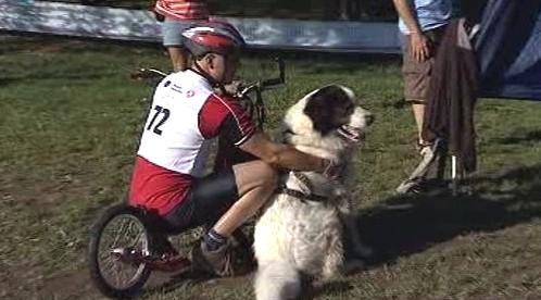 Závody tažných psů