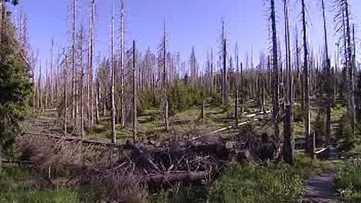 Les zasažený kůrovcem