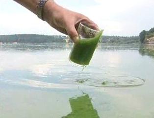 Voda napadená sinicemi