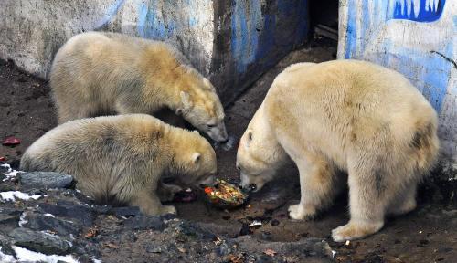 Medvědi s narozeninovým dortem