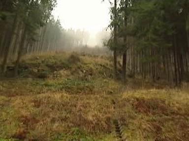 Lesní svah