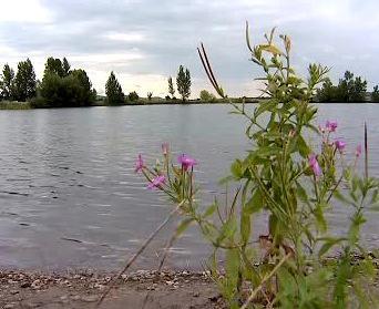 Malá Laguna Nových Mlýnů