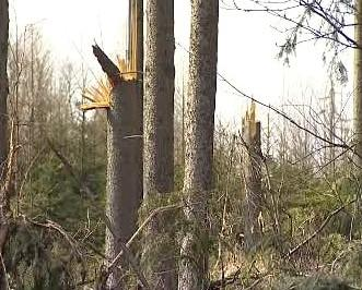 Les po vichřici
