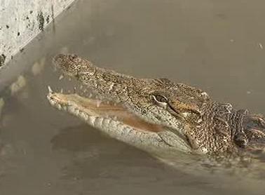 Krokodýli na jižní Moravě