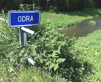 Křídlatka na břehu Odry