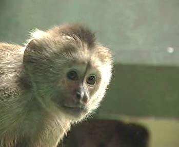 Opička malpa