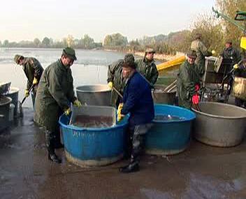 Jistebničtí rybáři při výlovu